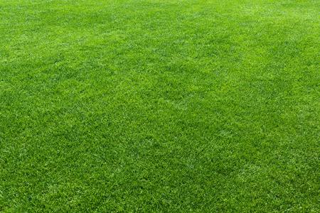 Grüner Rasen, Hintergrund eines grünen Gras Standard-Bild