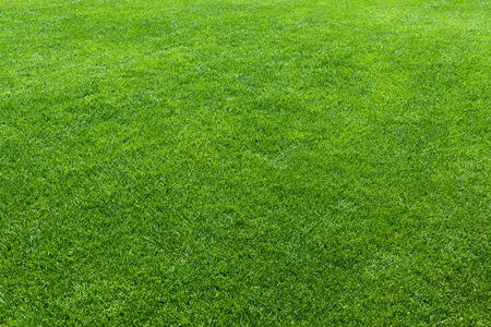 Green lawn, background of a green grass