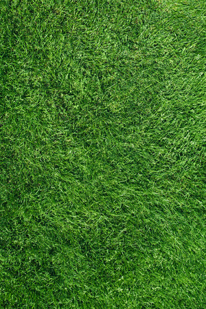 Green football Grass Field Top View Texture Close up Standard-Bild