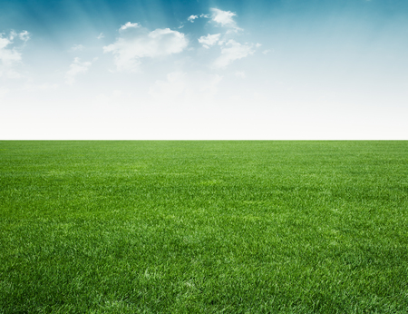 groen veld en blauwe hemel, groen gras onder blauwe hemel