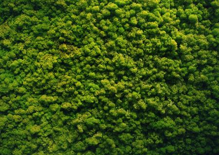 緑の苔の背景の壁のテクスチャ 写真素材