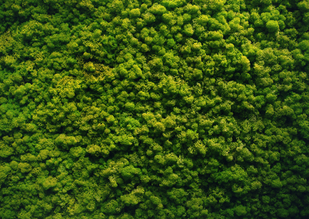 green moss background wall texture Stockfoto