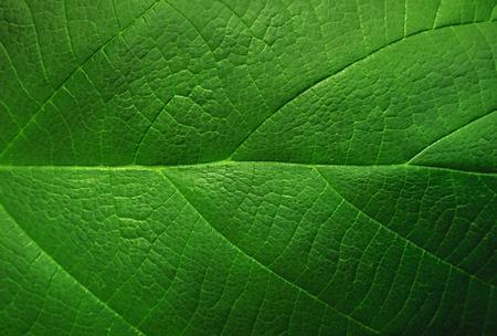 green leaf macro close up Standard-Bild