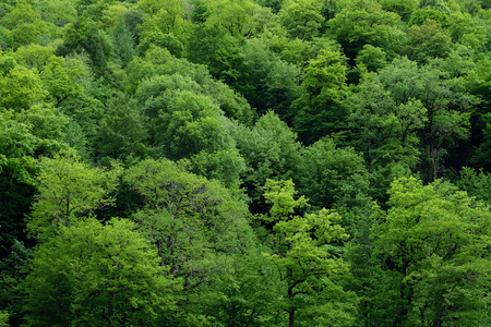 Healthy green trees in a forest of a national park background