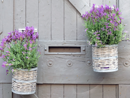 wicker basket with lavender flowers on wooden background, two flower pot