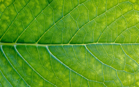 green leaf macro texture close up background