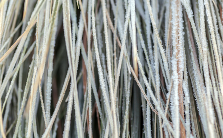 grass in the frost close up macro in hoarfrost background Reklamní fotografie