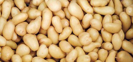 fresh organic potato on market close up potatoes background texture