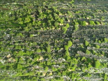 tree moss 01 Reklamní fotografie - 85612522