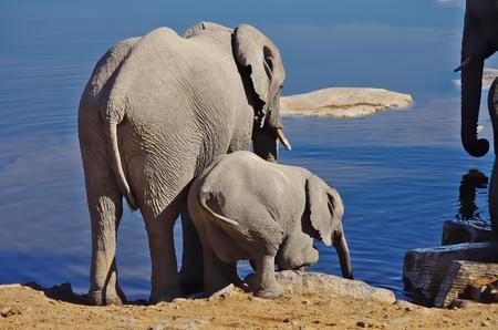 Elephant family 写真素材