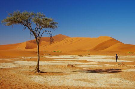 wandering: Wandering in the desert
