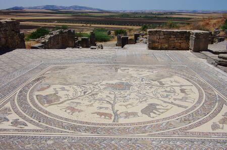 volubilis: Mosaic at Volubilis