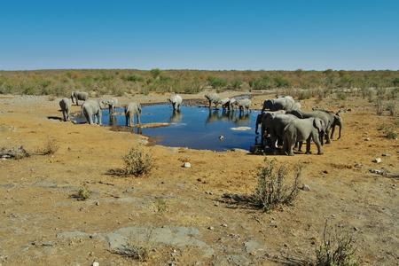 pozo de agua: Grupo de elefantes en el abrevadero