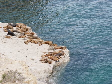 Group of sea lions on a rock on the coastline of Peninsula Valdez, near Puerto Pyramides. Patagonia Argentina. 版權商用圖片