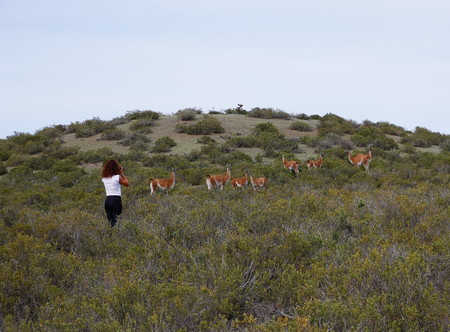 Young tourist near a group of Guanacos on a hill in the inland of Peninsula Valdez, Patagonia Argentina 写真素材