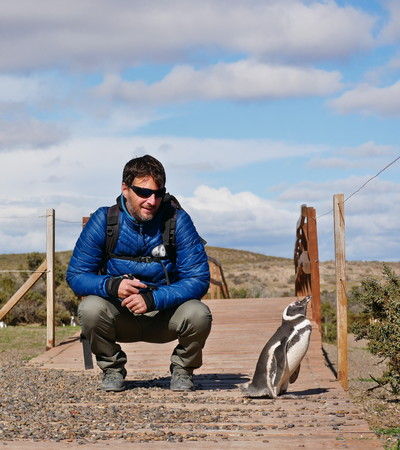 Tourist walking among Magellanic penguins in the natural reserve of Punta Tombo, Patagonia Argentina 報道画像