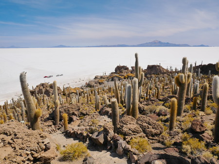 The incredible salt flat of Salar de Uyuni, on the andean altiplano of Bolivia, South America, seen from the Isla Incahuasi, an island emerging from the salt