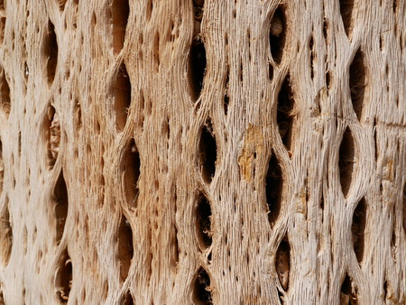Textures of dry cactus woods. In northern Argentina cactus wood are used for buildings.