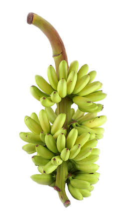 bunch of bananas isolated on white back ground with clipping path