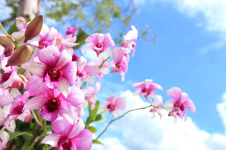 olant: Orchid Blooms on blue sky Stock Photo
