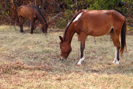 synchronously: Horse eatting on grass