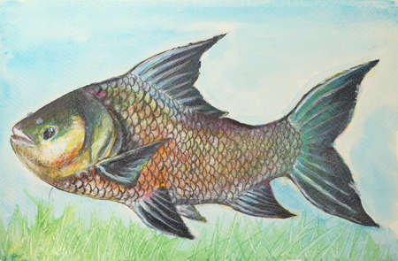 drawing fish from water color  photo