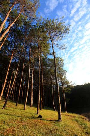 pang: Pang Ung Forestry Plantations, Maehongson, North of Thailand