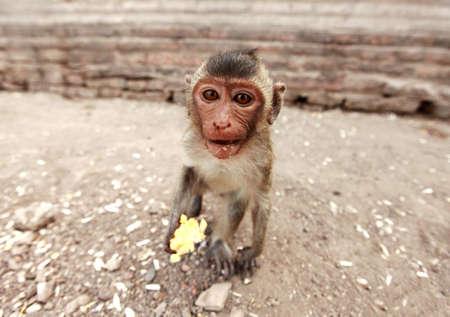 Baby monkeys photo