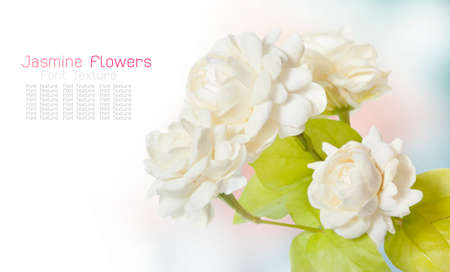 Jasmine flower on white background texture(for Mother Day of Thailand)