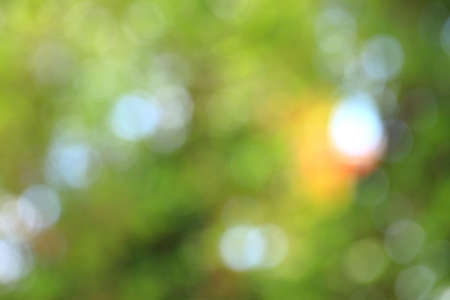 abstract blur green background  Stock Photo