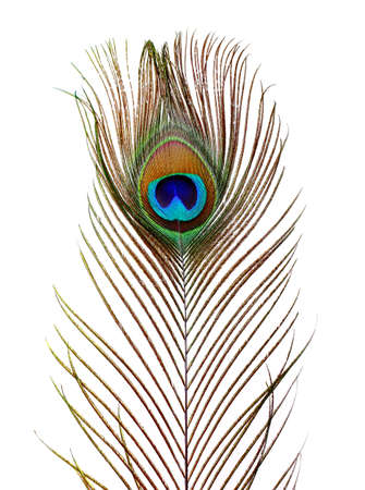 Peacock feathers on white background  photo