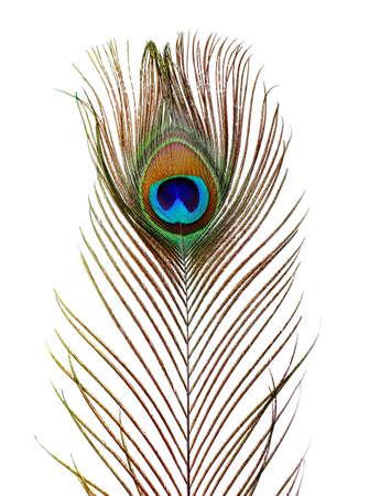 pluma de pavo real: Plumas de pavo real en el fondo blanco Foto de archivo
