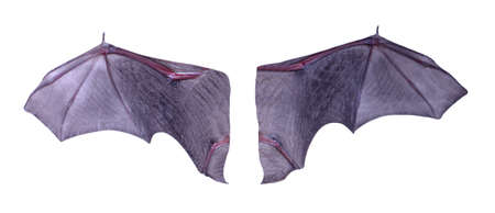 Little black Bat isolated on white background. 版權商用圖片