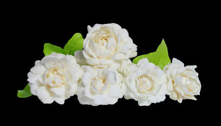 Jasmines flower on white background.