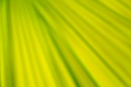 greenness: Wave eco background green abstract nature pattern. Stock Photo