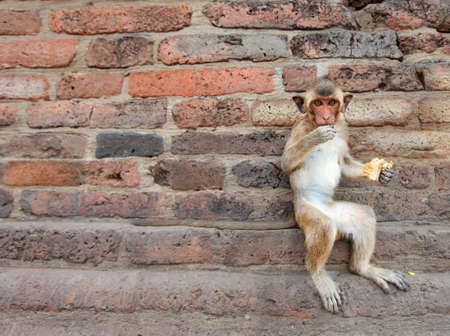conglomeration: monkeys are curious,Lopburi, Thailand. Stock Photo