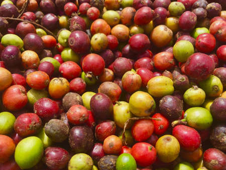 Colorful raw coffee beans closeup background.