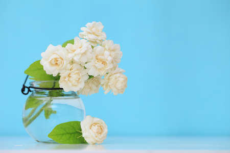 Beautiful jasmine flower in the pot on green blur background.Copy space on light green background.