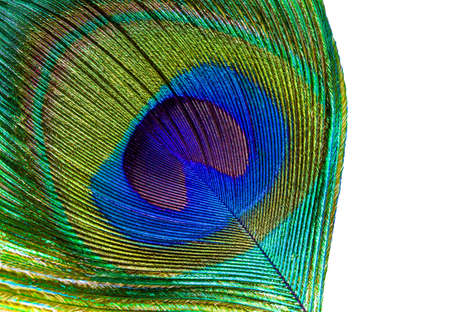 Peacock feather eye abstract closeup on isolated white background.