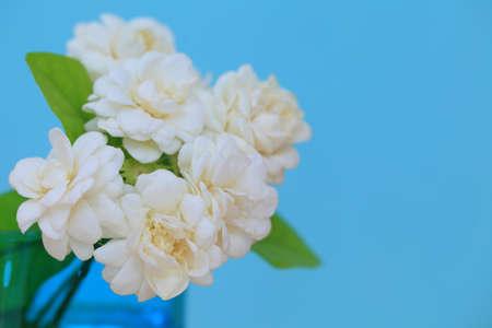 Jasmine flower in the pot on green blur background.Copy space on green background. 版權商用圖片