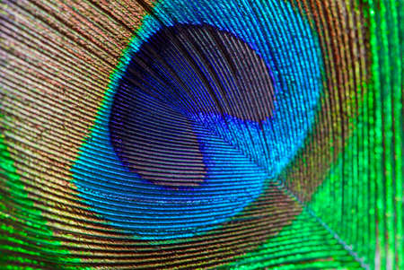 Peacock feather eye abstract closeup background.