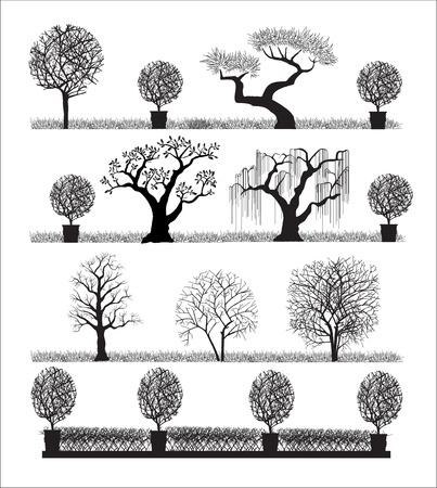 silueta hoja: Silueta de los �rboles sobre un fondo blanco