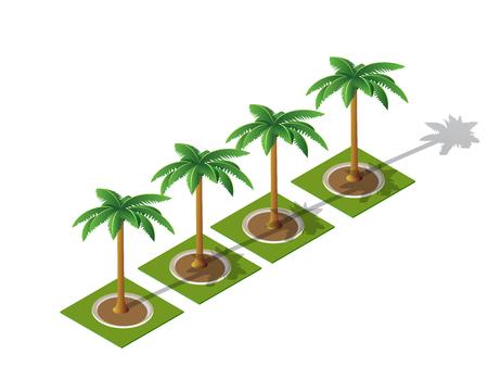Set of isometric 3D palm