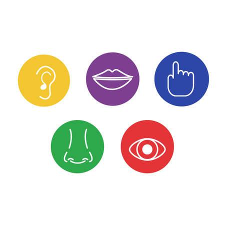 Set pictogrammen van de vijf menselijke zintuigen: zicht, geur, gehoor, aanraking, smaak.