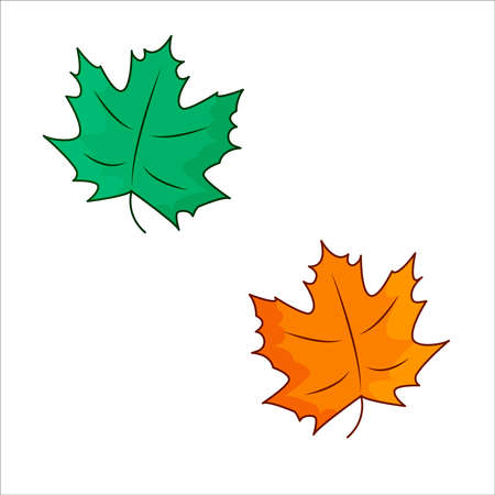 Green and orange maple leaves, colorful illustration of autumn leaves on the white background