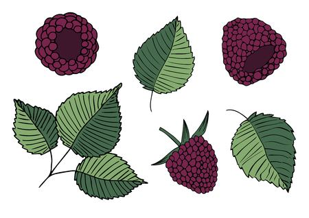Set of vector handdrawn illustrations of blackberries and leaves isolated on white background