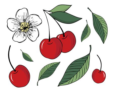 Set of vector handdrawn illustrations of cherry, leaves and blossom isolated on white background