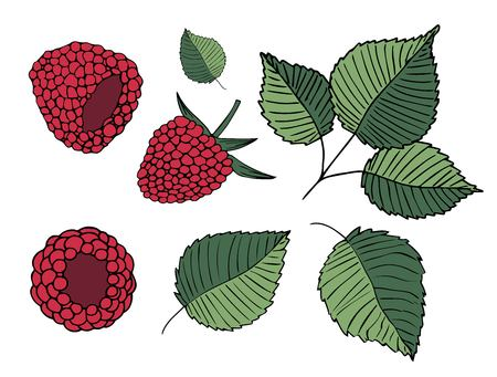 Set of vector handdrawn illustrations of raspberries and leaves isolated on white background