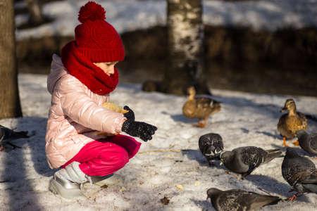little girl feeding ducks in the spring