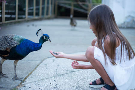 beautiful girl feeds a peacock in the park, cute baby.